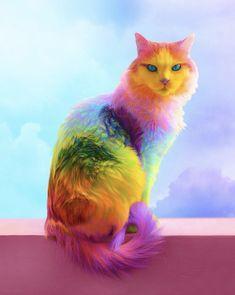 Rainbow cat - Amelia Home Cute Little Animals, Cute Funny Animals, Cute Cats, Colorful Animals, Cat Colors, Colours, Cat Supplies, I Love Cats, Cat Art
