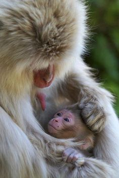 MONKEY AND HER BABY.....PARTAGE OF AMAZING AND ANIMAL PICS ON FACEBOOK.........