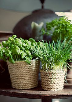 Herb Pots [wrap sisal rope around clay pots]
