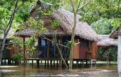 Amazon rainforest, living in the amazonian rainforest at Muyuna lodge  http://travelexperiencesofalifetime.com/en/alojamiento/muyuna-lodge/