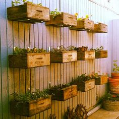 Vintage crate planters, succulents  inhome gardens. to do this on the back side of the fence of the garden. I wonder of I could do the back side of the fence wood and the rest wire see into??? how would that look??