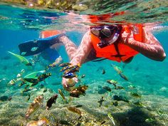 6 exotic paradise islands around Bali that will take your breath away - GILI GEDE