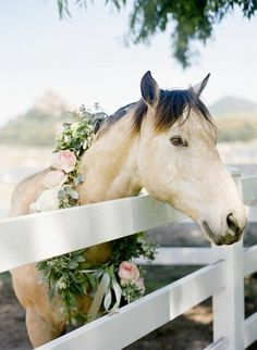 Horse with a flower wreath.