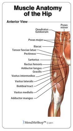 vastus intermedius origin antero/ lateral femur insertion, Muscles