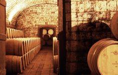 Badia a Passignano - Vineyards and Cellars