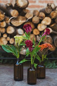 Coxcomb are available summer to fall. They come in a range of colors, from a light green to a honey-yellow, orange to rust, red, burgundy, and a deep fuchsia.