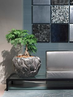Superb designer pots in gold, silver, lava effect and many other interesting rustic natural effects. Green Plants, Potted Plants, Indoor Plants, Flower Planters, Flower Pots, Planter Pots, Decorative Planters, Modern Planters, Container Plants