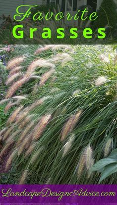 Ornamental grass can be a great garden addition to the landscape. Read about and see photos of my favorites such as Maiden Grass, Fountain Grass and Japanese Blood Grass. Fountain Grass, Front Yard Landscaping, Landscaping Ideas, Texas Landscaping, Landscaping Software, Garden Inspiration, Garden Ideas, Ornamental Grasses, Garden Plants