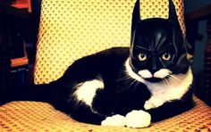 Bat Cat. Looks just like Alice but the mask would never last