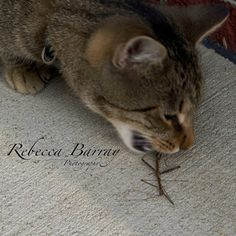 Yuck! by Rebecca Barray