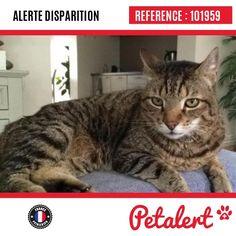 20.09.2016 / Chat / Piennes / Meurthe-et-Moselle / France