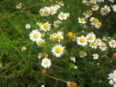 Bylinkovo.cz - vše o bylinkách a superpotravinách Plants, Plant, Planets