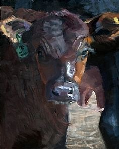 Black Angus: Milky Nose by Daria Shachmut Oil ~ 20 x 16
