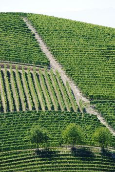 Vineyards in Barbaresco, PIemonte (Italy) #wine #Piedmont