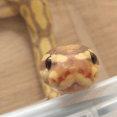 Image result for booping snake gif