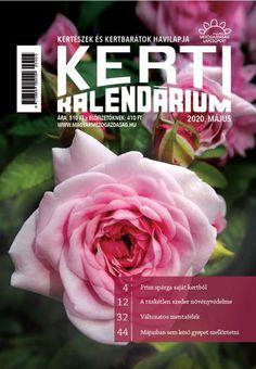 A málna tavaszi tápanyag-utánpótlása Rose, Flowers, Plants, Pink, Plant, Roses, Royal Icing Flowers, Flower, Florals