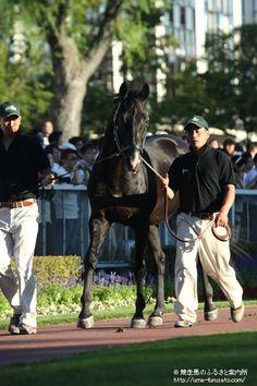 9月1日、札幌2歳S(G3)で盛り上がりを見せたJRA札幌競馬場において、1995年の皐月賞馬ジェニュイン(牡20歳)がお披露目された。   ジェニュインは千歳市・社台ファームの生産。父サンデーサイレンス、母クルーピアレディー、母の父ワットラックという血統で、甥には菊花賞馬のアサクサキングスがいる。   競走成績は21戦5勝。1995年の皐月賞(G1)を制し、サンデーサイレンス産駒初のクラシックウイナーとなったほか、1996年のマイルチャンピオンシップ(G1)にも優勝した。札幌競馬場には1997年の札幌記念(G2)で出走している。   久しぶりにファンの前に姿を現したジェニュインは、現役時代と変わらぬ黒光りした馬体を披露。20歳とは思えぬ若々しさで、気合を全面に押し出してパドックを周回した。   パドックのスクリーンでは皐月賞(G1)やマイルチャンピオンシップ(G1)のレースの映像や現役時...