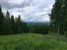The Great Finnish Road Trip - Kuopio | Effortlessly Excessive
