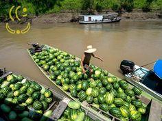 The New Yooker Times   Crédito emergencial é liberado para agricultores afetados pela cheia no AM   12af unnamed   urandir   BRASIL   Crédito emergencial é liberado para agricultores afetados pela cheia no AM  http://www.yooker.com.br/br/brasil-2/TheNewYookerTimes-brasil-credito-emergencial-e-liberado-para-agricultores-afetados-pela-cheia-no-am.html