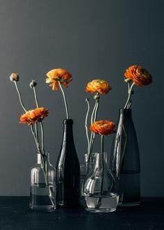 Aiala Hernando Photography   orange ranunculus and dark background