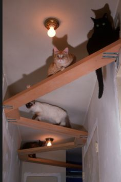 3492 best cat house images in 2019 dog cat funny animals funny cats rh pinterest com