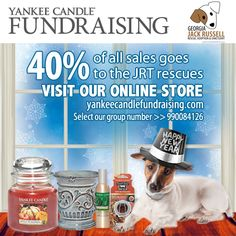 "Forgot to order your Yankee goodies for the holidays? Never fear, there's still time for the new year! Our fundraiser continues through Thursday.  To shop for the rescues, go to yankeecandlefundraising.com and scroll down to the ""Start Shopping"" area. Enter our group number > 990084126. Bam! That's it. Now go shopping.  Items are shipped directly to you within 3-7 days and there's even FREE shipping on all orders over $100."