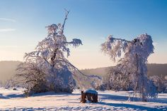 Winter in the Black Forest 2 by Pascale Teufel on 500px