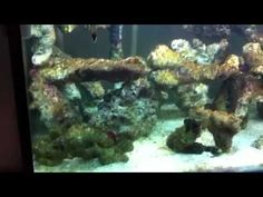 Johns bumpy start to his new reef tank