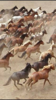 Horse photography - Stampede                                                                                                                                                      More