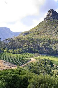 Private Tour: Cape Point and Constantia Valley Wine Region from Cape Town Travel Activities, Cape Town, Wine Tasting, Day Trips, South Africa, Tours, Water, Outdoor, Road Trip Activities