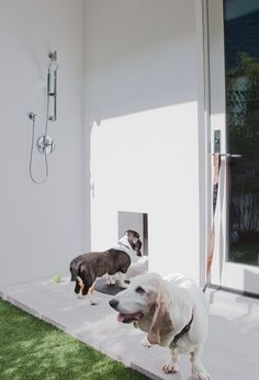 Dog Bath Design, Contemporary Patio With Outdoor Dog Wash Station Also Modern Mixer Tap And Shower Head Design Also White Wall Color And Two English Coonhound Dog Race: Ideas for Dog Wash Station Outdoor Baths, Outdoor Dog, Outdoor Showers, Outdoor Living, Outdoor Spaces, Outdoor Ideas, Pet Washing Station, Outside Dogs, Living With Dogs