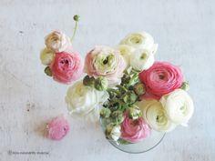 flowers from my husband  Boglárka, a kedvenc virágom, férjecskémtől. :-)