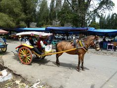 Sado is only in Berastagi.Traditional transportation are still preserved for tourists.  MEJUAH-JUAH!!!! <3 <3 <3