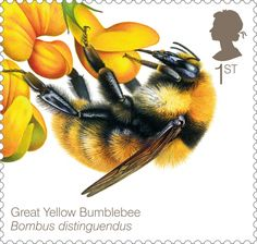 Bees Great yellow Bumblebee 400 Stamp