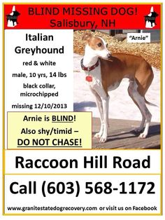 9 Best GREYHOUNDS - US LOST DOG REGISTRY images in 2013
