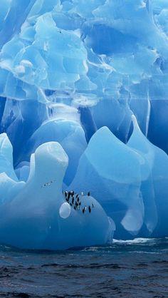 Penguins and icebergs, Antarctica.