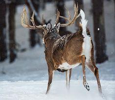 Deer Hunting Tip: Track Down a Bumped Buck | Field & Stream