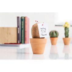Cactus de liège