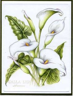 psx calla lily by Colorin' Kate - Cards and Paper Crafts at Splitcoaststampers - Trend Lilie Tattoo 2019 Lily Painting, Fabric Painting, Painting & Drawing, Flower Sketches, Drawing Sketches, Art Drawings, Lilies Drawing, Floral Drawing, Watercolor Flowers