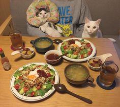 大盛りタッコライス♩ スマンなっお父はんいつもご飯作るのん遅くて。 #八おこめ #ねこ部 #cat #ねこ #八おこめ食べ物 #タコライス
