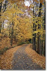Solid-Faced Canvas Print Wall Art Print entitled Path in forest, Autumn Canvas Wall Art, Wall Art Prints, Poster Prints, French Beach, South Island, Vancouver Island, Canada Travel, British Columbia, Paths