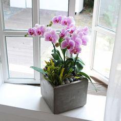집안의 작은 정원 -연핑크호접