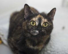 Pretty Esme needs to find her forever home.