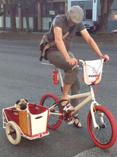 A bicycle built for two! #dogs #pets #Pugs #puppies Facebook.com/sodoggonefunny
