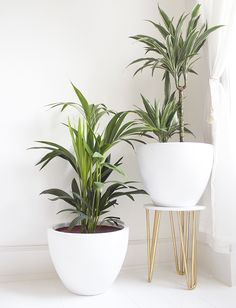 plant stand or diy stool