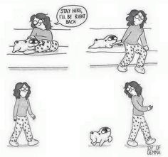 Funny Pug Dog Meme LOL