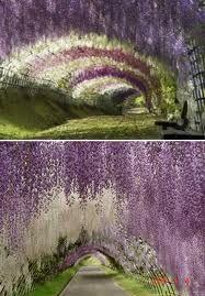 tunnel of love ukraine - Cerca con Google