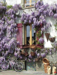 Rochefort-en-Terre glycines, village préféré des Français en 2016