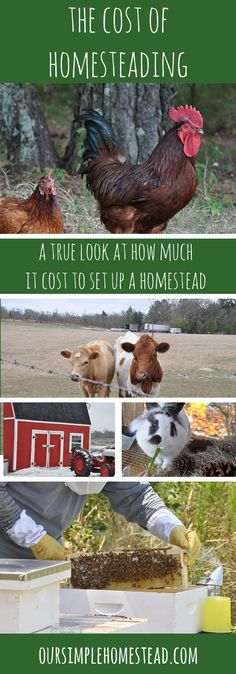 Cost of Setting Up a Homestead - I know it is not socially acceptable to talk about how much things cost or how much we spend, but I do want to give an accurate look into the cost of setting up a homestead.
