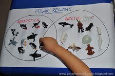 Study of the Polar Regions (Arctic and Antarctic Unit) Preschool Learning Activities, Winter Activities, Preschool Activities, Snow Theme, Winter Theme, Planet Crafts, Arctic Explorers, Artic Animals, Polo Norte